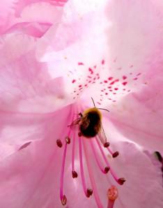 Les pollinisateurs sont incontournables en agriculture.