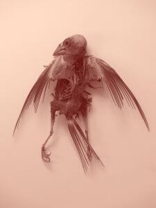 biologie-biodiversité-virus